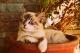 Ze života naší kočky